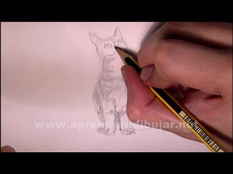 Dibujos de gatos - Cómo dibujar un gato sentado a lápiz