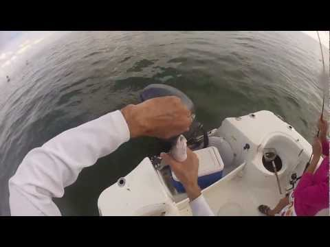 Inshore snapper fishing in Tampa Bay