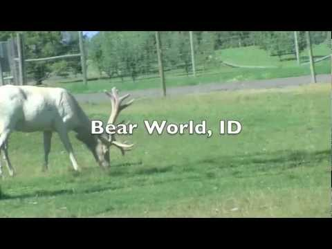 Bear World, ID