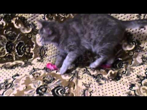 Кошка снимает тапки