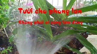 Cách tưới và thời điểm bón phân, xịt thuốc cho phong lan
