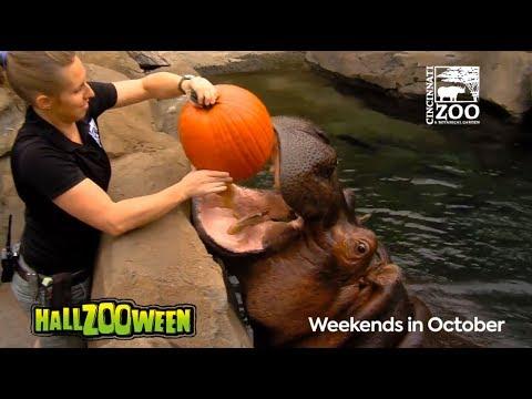 Tierisch gut: Diese Tiere sind im Halloween-Fieber