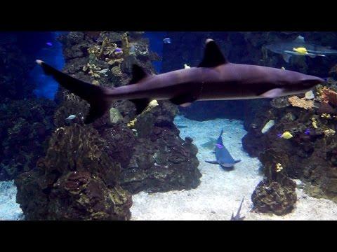 Aquarium Barcelona - complete review video.