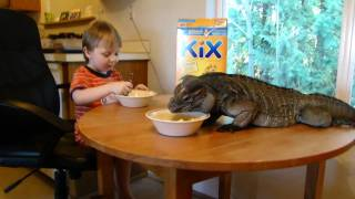 Rhino iguana (Buddy) and Logan eating breakfast