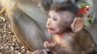 Poor baby monkey in Angkor - poor monkey life - baby monkey on the tree - Monkey Camp part 90