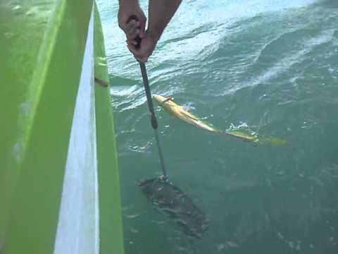 Pescaria de Dourado em S�o Sebasti�o Junho 2014