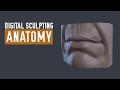 ZBrush Human Anatomy - Lips