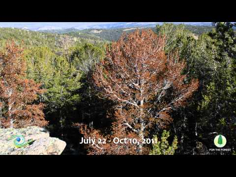 James Balog - Whitebark decline time lapse