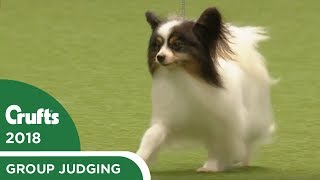 Toy Group Judging   Crufts 2018