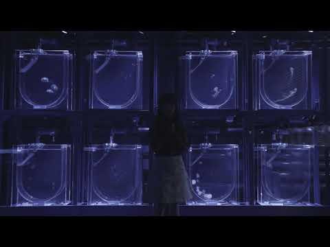 【やなぎなぎ】「未明の君と薄明の魔法」スポット(30 秒) - YouTube (10月15日 04:00 / 16 users)