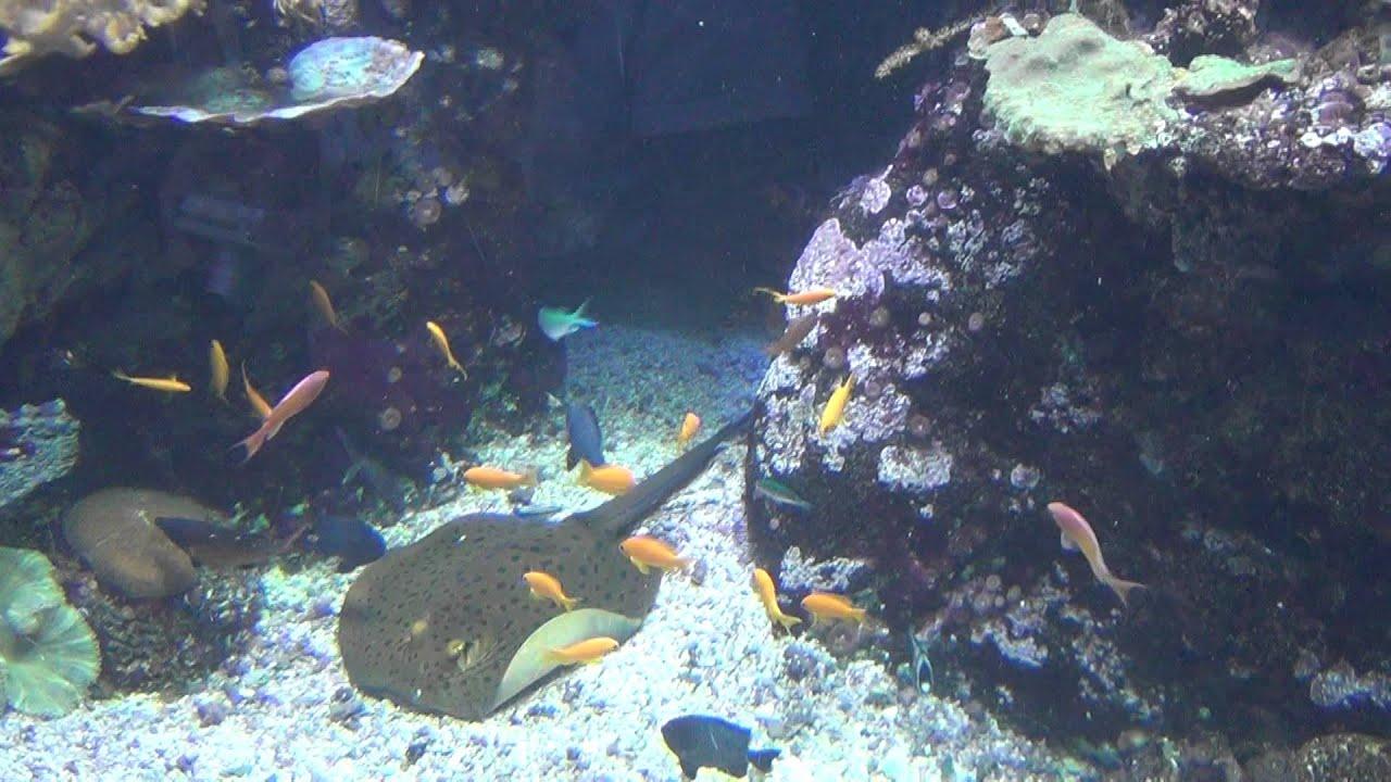 Pesci tropicali all 39 acquario di genova 2 youtube for Pesci tropicali acquario