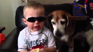 Funny dogs annoying babies   Cute dog & baby compilation