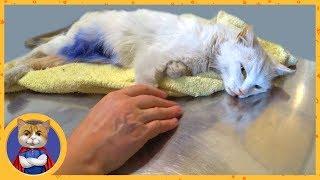 Последнее видео про спасенную кошечку