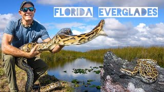 Catching Invasive Pythons in the Florida Everglades!