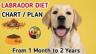 Labrador diet chart | Labrador puppy diet plan | in hindi | dog diet plan