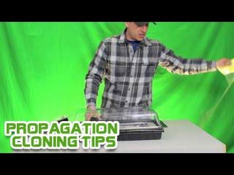 Propagation Cloning Tips Heat Mat Temperature Controller -Best Propagation Tray Heat Mat 1020 Trays