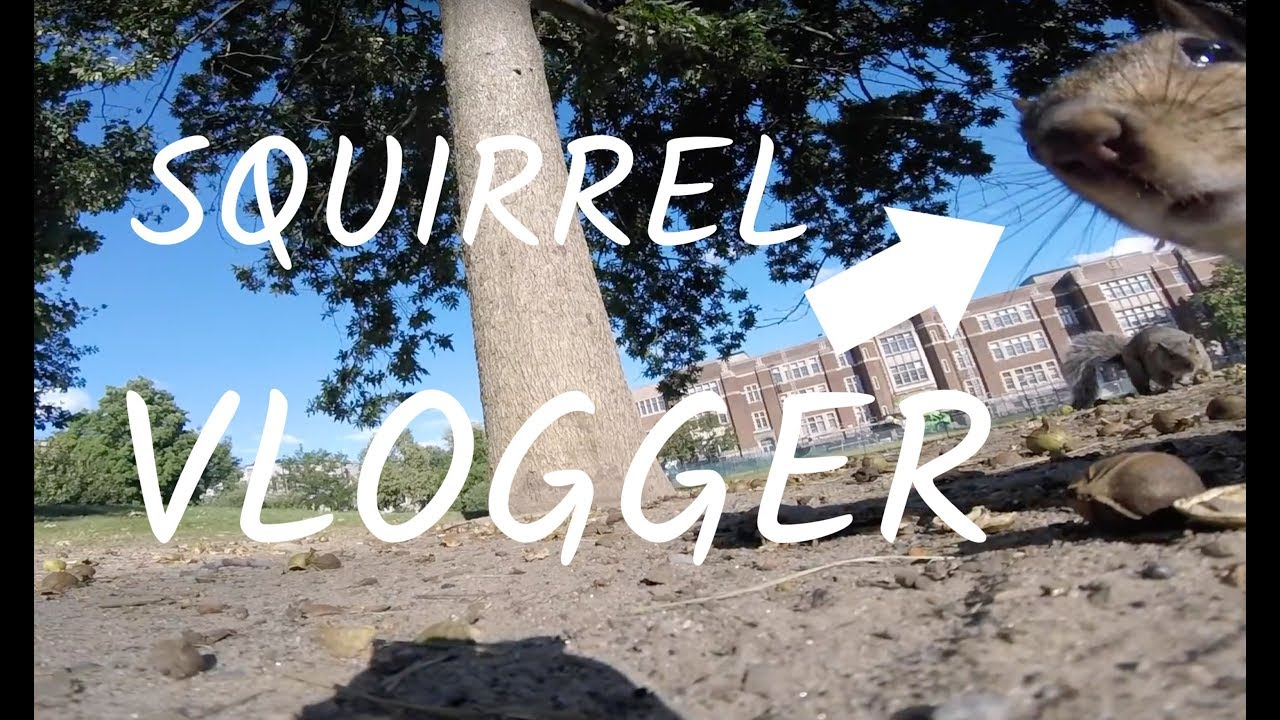 Squirrel Steals A GoPro And Goes Adventuring