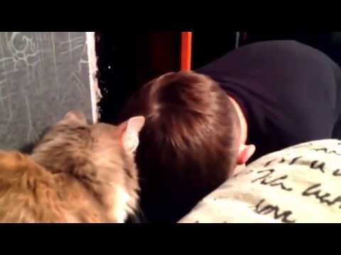 猫の前で泣きまねをしてみ...