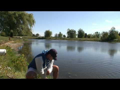 Super Fluke - Pond Fishing for Largemouth Bass