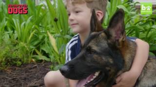 Loyal German Shepherd Helps Family With The Chores