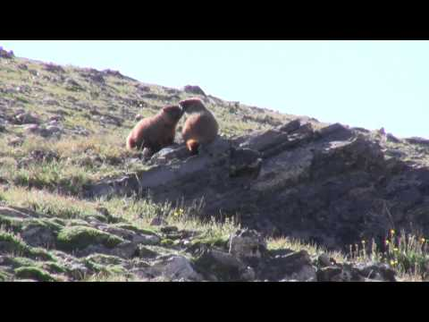 Wildlife of Rocky Mountain National Park