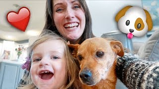 Adopting Our Dog - From Junk Yard to Backyard