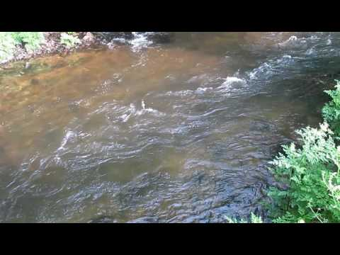 River Camel fishing conditions 29th May