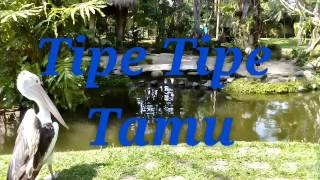 Tipe Tipe Tamu