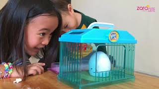 Unboxing Little Live Pets Chick | Egg Surprise | Zara Review Mainan Anak | Lets Play