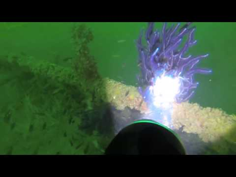 Wreck Diving 11 15 13 video