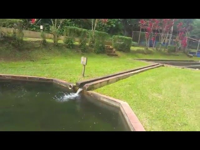 Maricao video watch hd videos online without registration for Vivero para peces