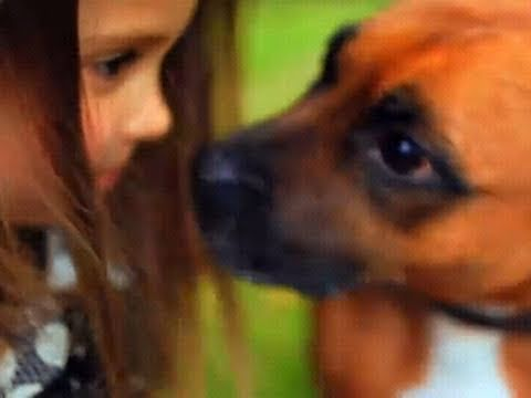 RSPCA video - Britain, Love Your Staffy!