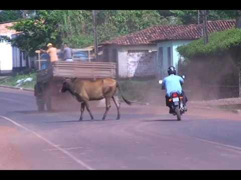 Acidente de moto Animais na pista.