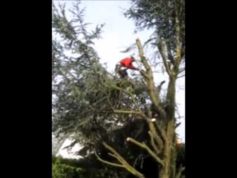 abattage d 39 un arbre de 15 m tres de haut youtube. Black Bedroom Furniture Sets. Home Design Ideas