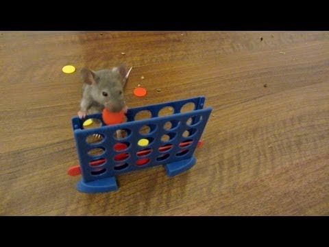 Mouse Talent - These mice have some impressive skillz
