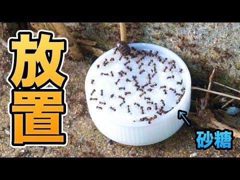 田舎のアリに砂糖あげたら量が半端ない!! 【放置】&井戸水出たぞー PDS