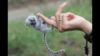 Cute Monkeys Part #43 - Free and Happy time Baby Finger Monkey. You know those aren't monkeys right?