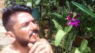 Dicas de Cultivo de Orquídeas 186