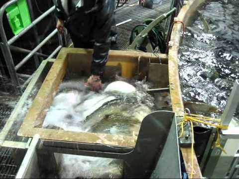 Freshwater Institute: Closed-Containment Aquaculture Systems