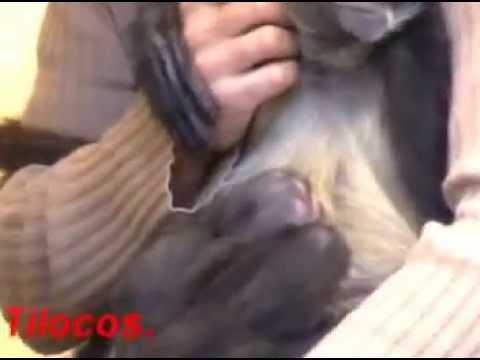 Erick Tinoco Mono Araña nacimientos gemelos