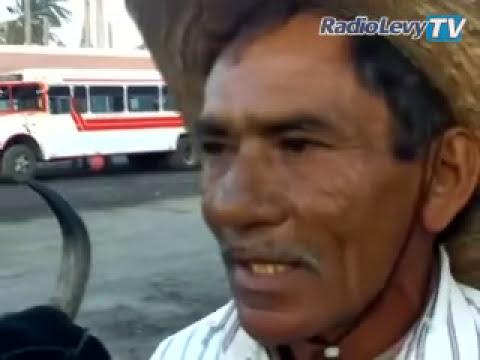 ¿Un búfalo en playas de Colima?