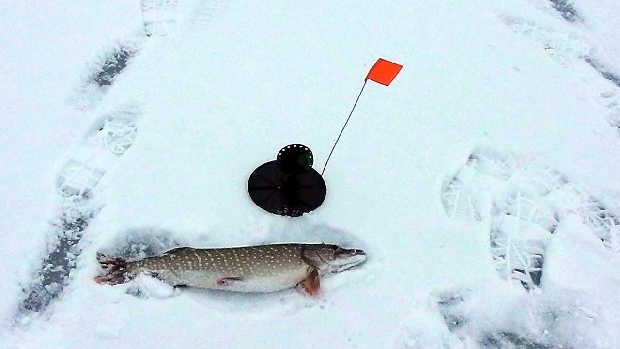 Как сделать жерлицы на щуку для летней рыбалки