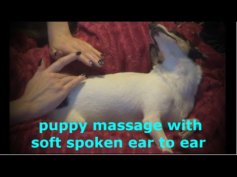 ASMR puppy massage/back scratching *soft spoken ear to ear with calming music*