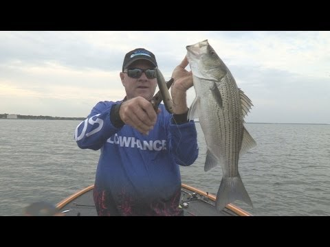 Lake Tawakoni TX Hybrid Stripers Southwest Outdoors Report #32 - 2012 Season