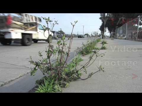 Common Weeds Like Grass Lawn & Garden Types Growing Out of Sidewalk Crack | HD Stock Video Footage