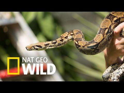 Węże W Mieście - Nowy Zwiastun