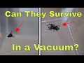What Happens When You Put A Spider And A Fly In A Vacuum Chamber? Will They Survive?