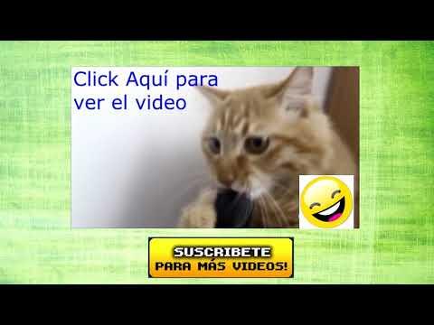 Videos de Risa - Animales - Perros y Gatos Chistosos