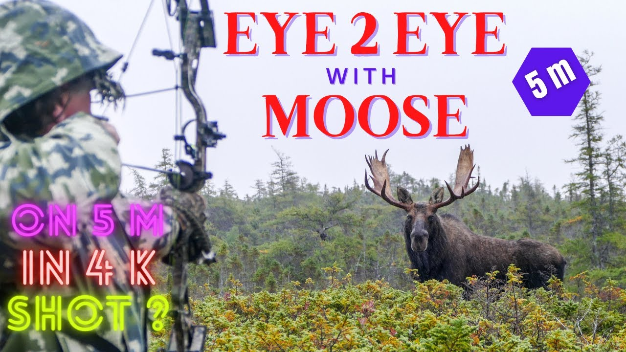 First K Moose And Caribou Hunt You
