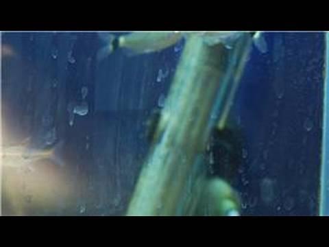 Fish Tanks Amp Aquarium Maintenance How To Clean Hard